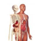 Clementoni İlk Keşiflerim İnsan Anatomisi 64297